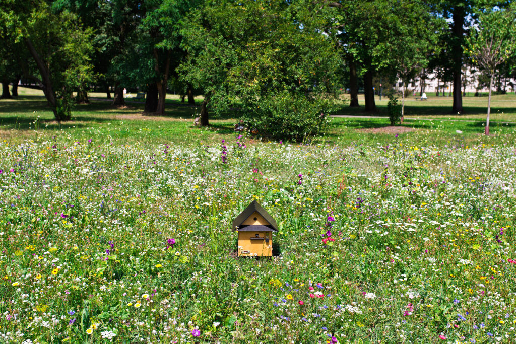 Łąki kwietne dla pszczół