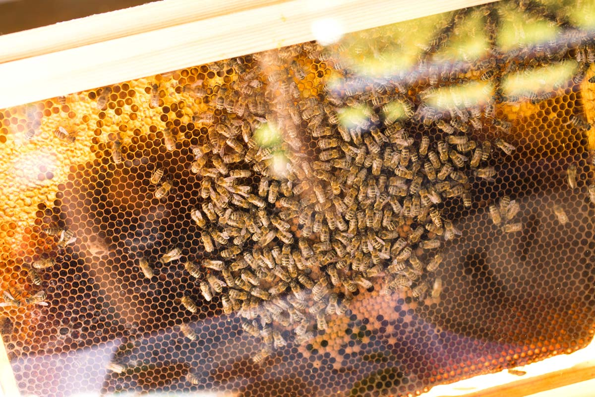Adoptuj pszczole Loft Kulinarny